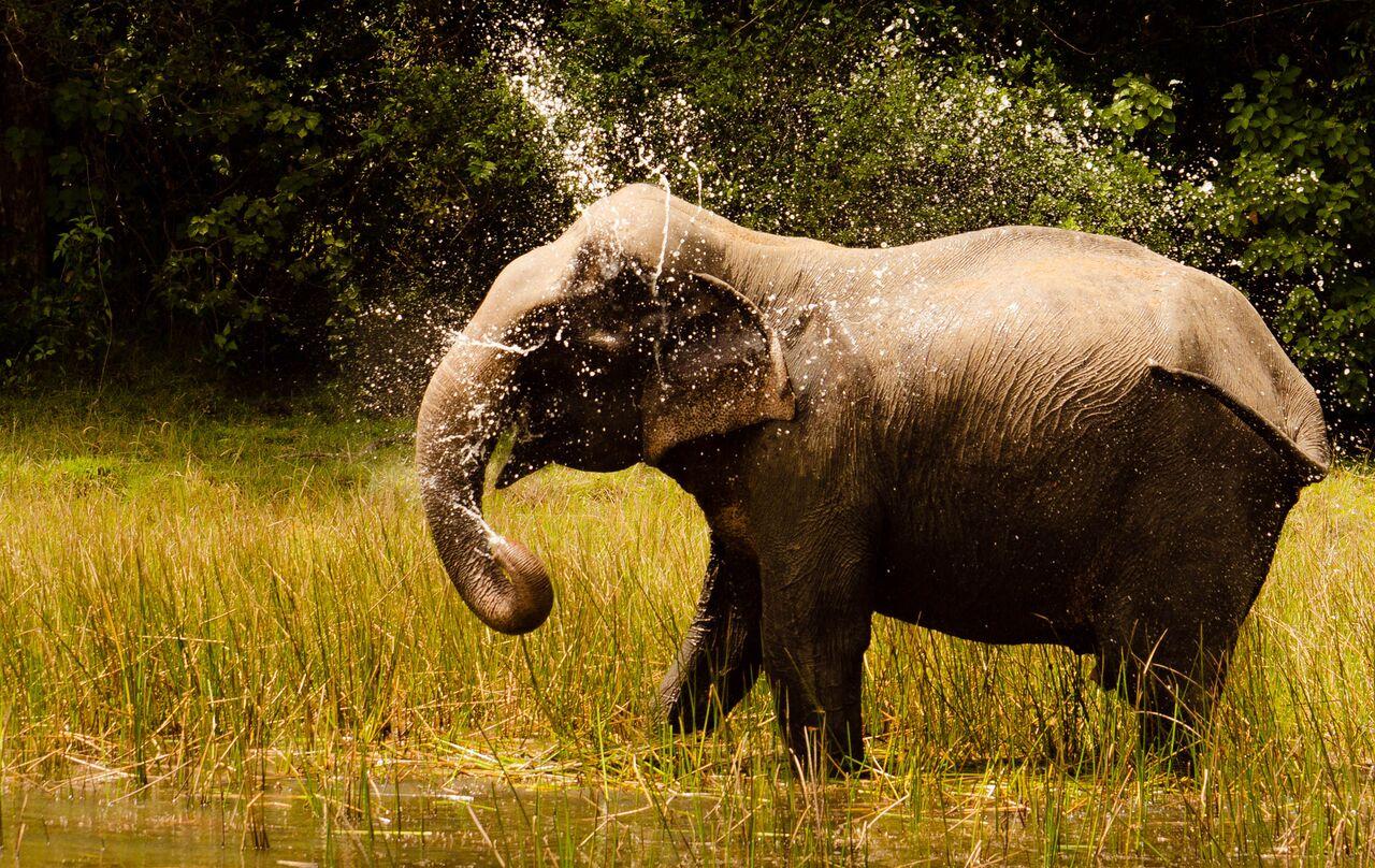 Olifant speelt in water in Yala nationaal park