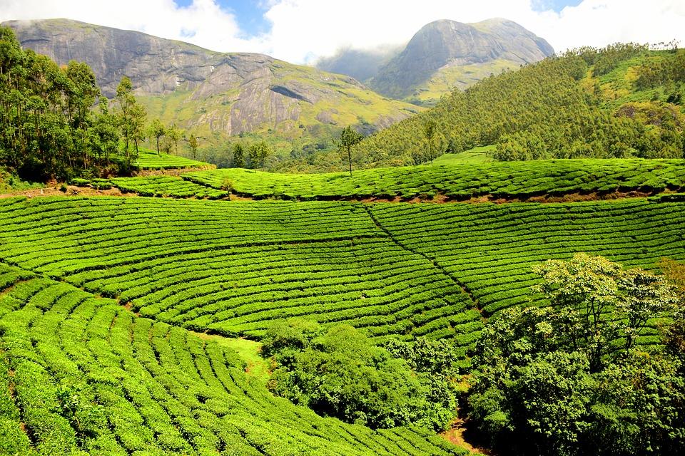 Terrasvormige theeplantage Sri Lanka