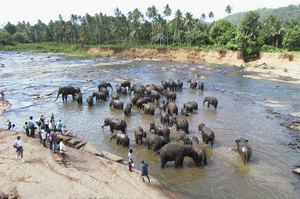 Badende olifanten in Sri Lanka